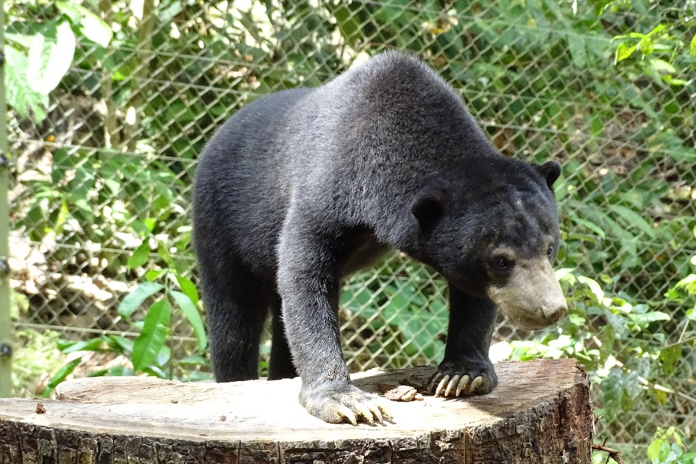 Sun bear habitat