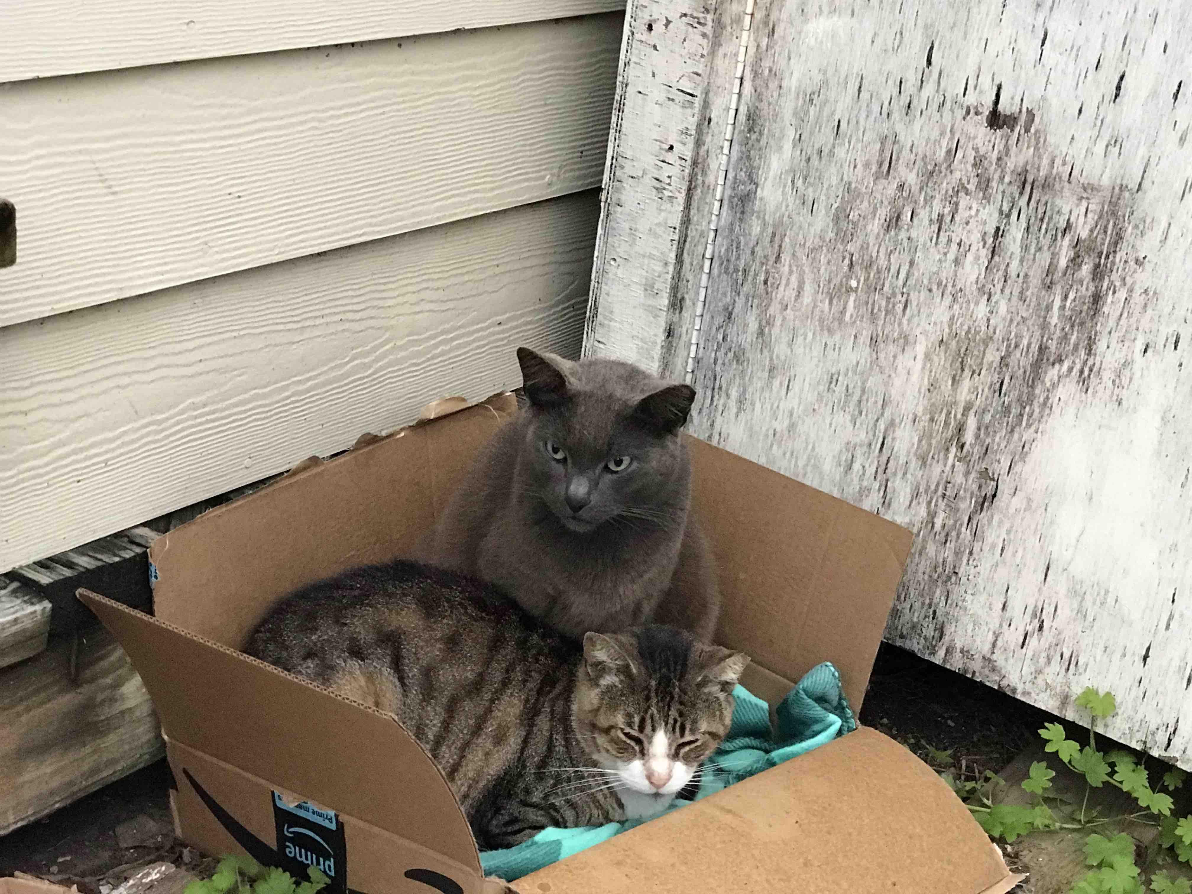 Free Cats Near Me