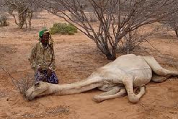 the causes of famine in africa In africa, famine has been declared in parts of south sudan while other areas in  somalia and nigeria are highly food insecure but the reasons.