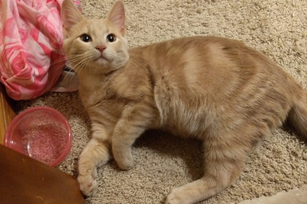 fundraiser by anne quinn lovely stray kitten needs help