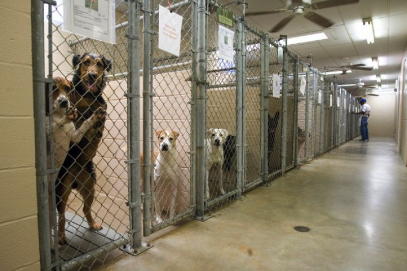 adoption of animals View the animals currently at the save shelter, or browse petfindersorg to preview animals that adoption counselors are available to answer your questions and assist in matching your individual.