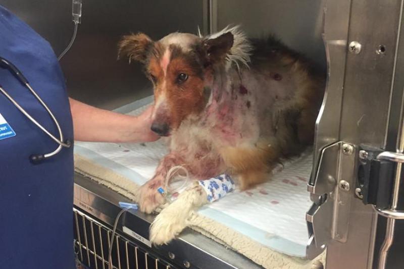 Dogs Bite Decatur Al: NORFOLK VA - 2 PIT BULLS INVADED TERRY