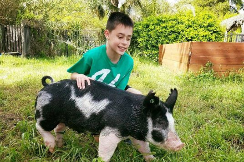 Fundraiser by alexis romero mann support my 4h hog sale donate now not now thecheapjerseys Image collections