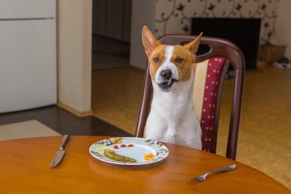Delaney's Dog Food Drive!!! by Maureen Delaney - GoFundMe