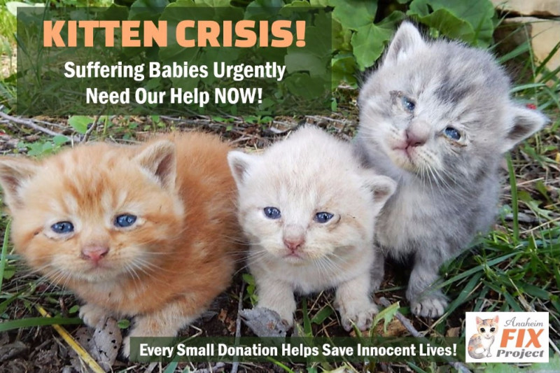 Fundraiser By Eve Sharon Hart KITTENS Suffering On The Streets