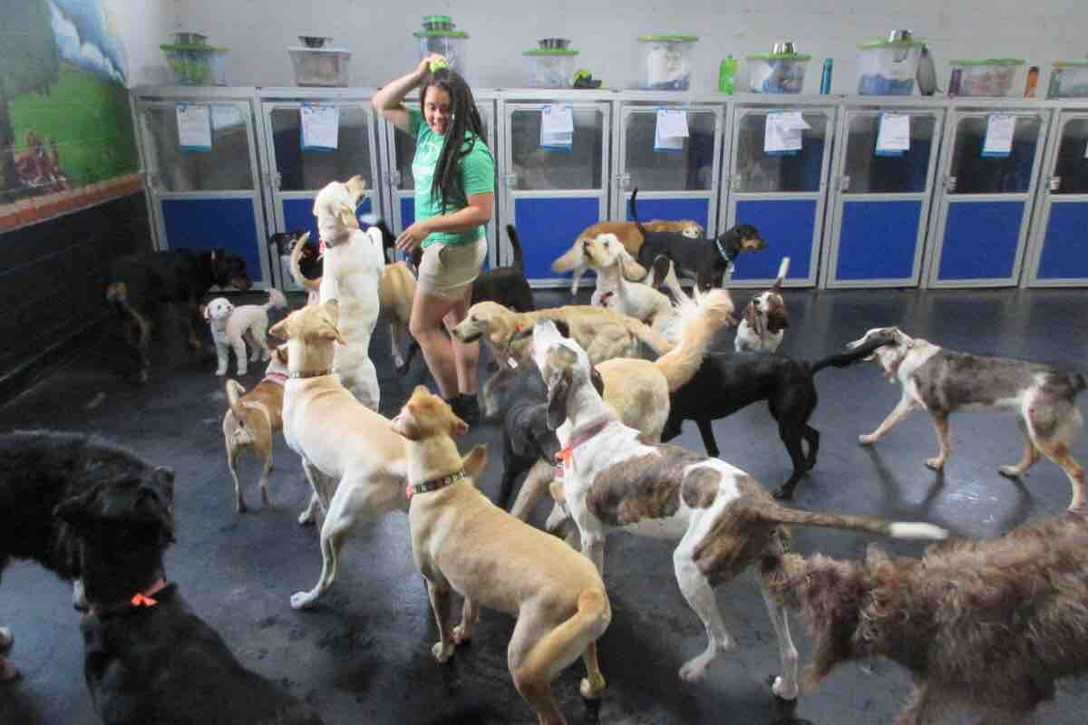 Fundraiser By Bree Northern Dog Training Certification