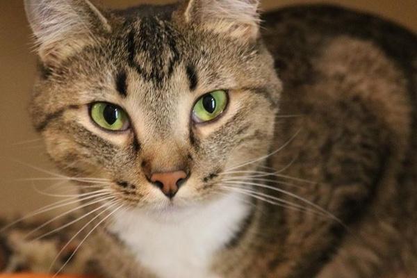 Fundraiser By Emily Procopio Help The Puppies Kitties