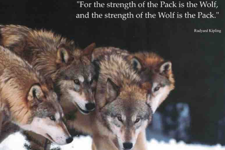 Fundraiser by Kathryn Fox : Wolfpack Christmas 2018