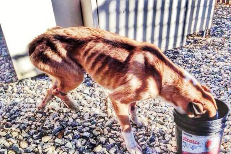 marleys mutts dog rescue