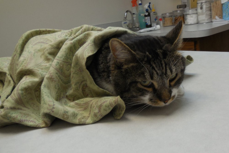 Long Term Foster Care For Cats