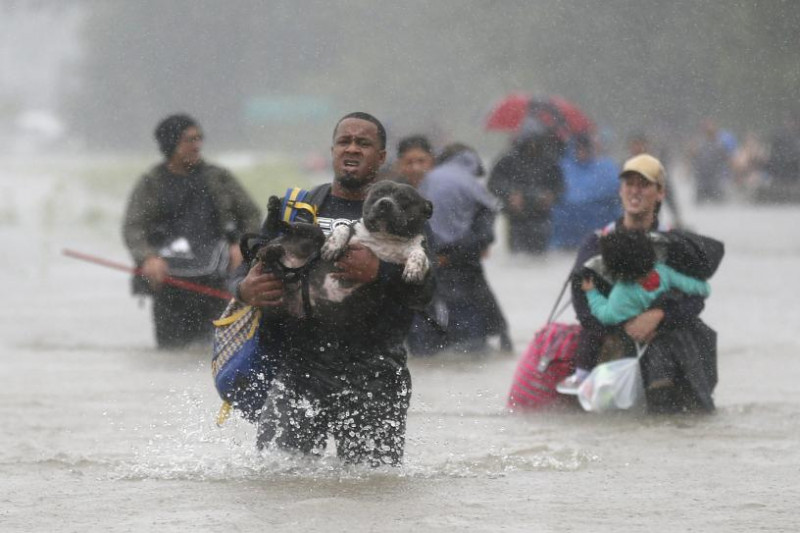America's Dog Pit Bull Rescue