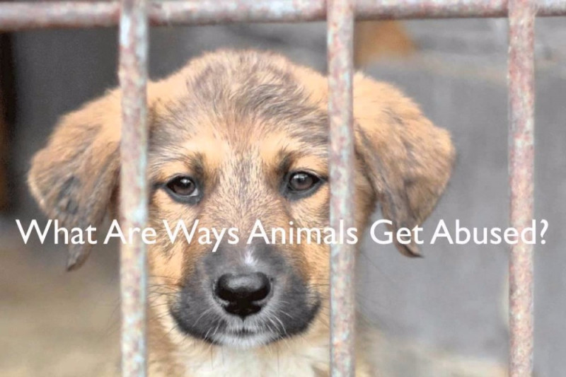 animal cruelty and abuse Animals are in danger of cruelty and abuse at the hands of humans everyday in 2007, the media brought to light 1,880 cases of animal cruelty  it is a staggering number and terrifying to think of so many animals suffering all over the world.