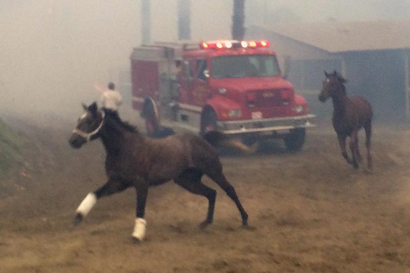 Help animals displaced by fire by San Diego Union-Tribune - GoFundMe