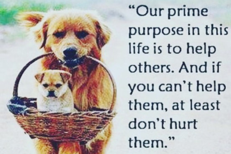 Image result for save animals