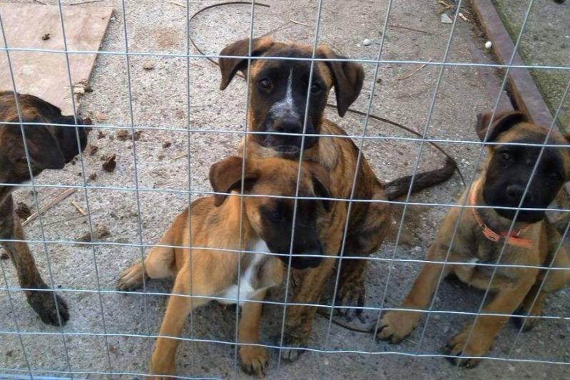 Fundraiser by Loukia Tomazos Agapis : Veterinary Service