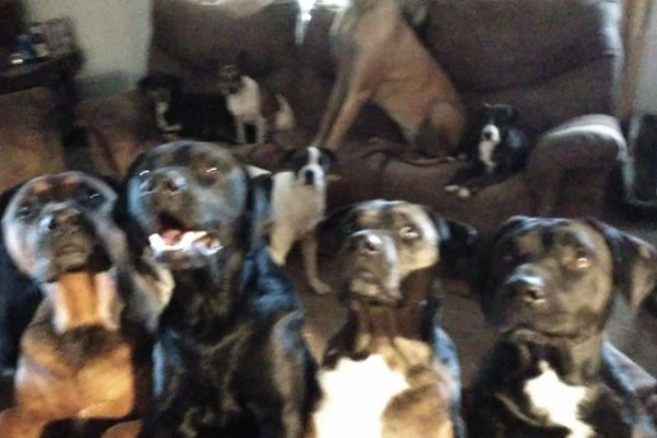 Fundraiser by Fred Hamilton : Free the dogs bring them home