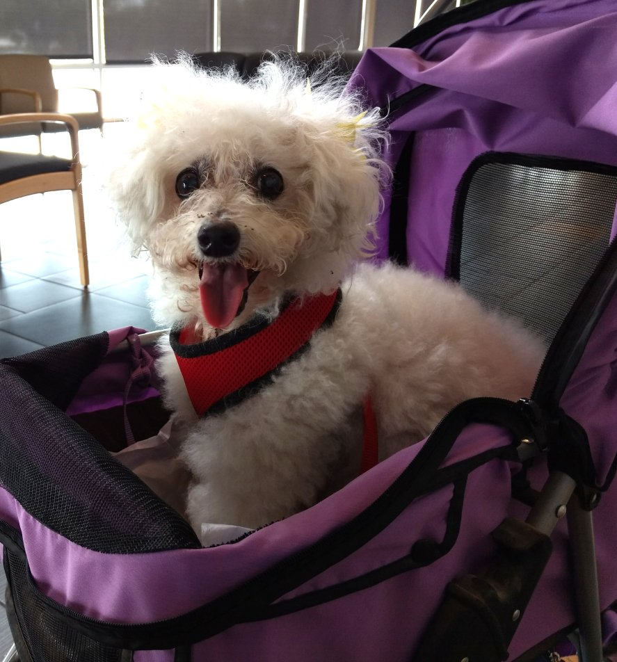 Fundraiser by Margo Baldrige : Pet Therapy Dog needs your help