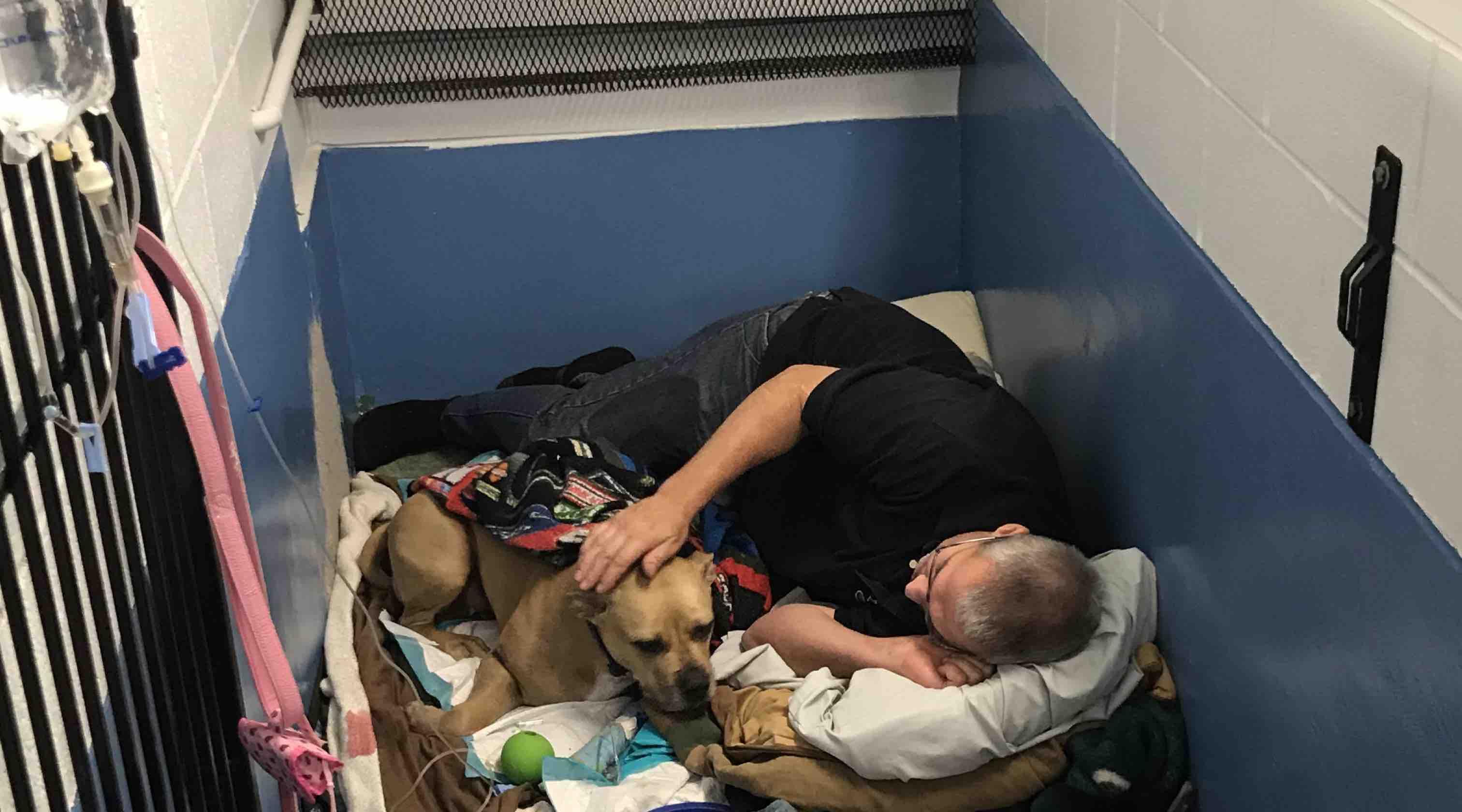 foto de Fundraiser by Jae Oslie : Veterinary Expenses For Missty