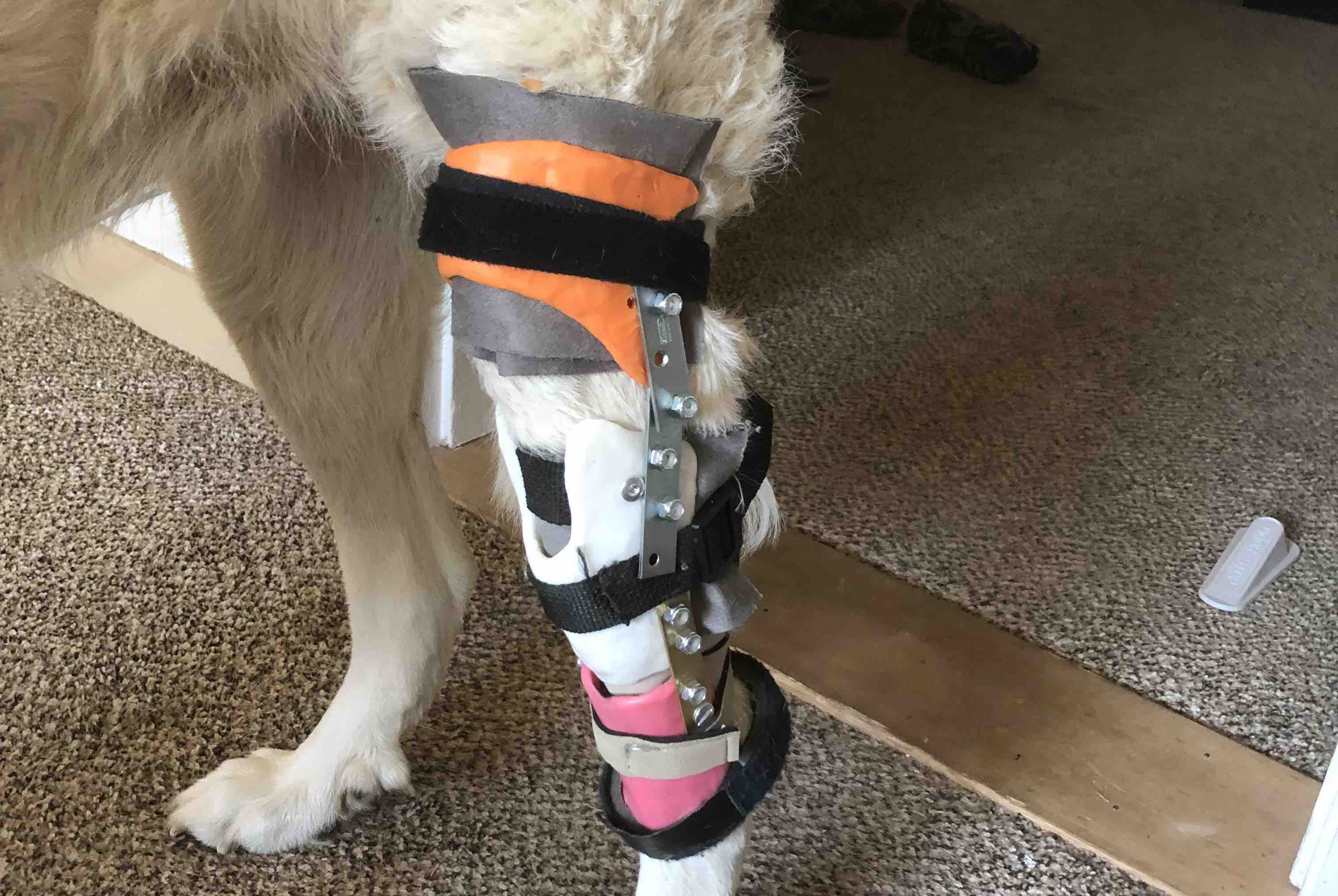 Fundraiser by Laura Josselson : Paying It Fwd - Custom K9 ACL Brace