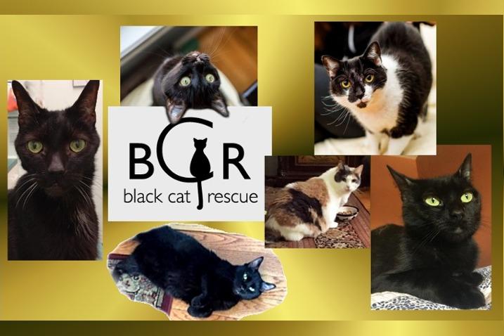 Black cat Rescue by Pearl Phelinepoli - GoFundMe
