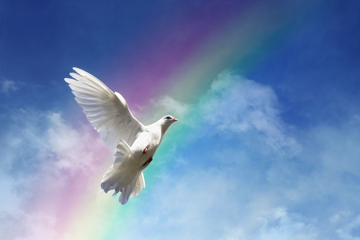 Белые птицы открытки, дракончиками для детей
