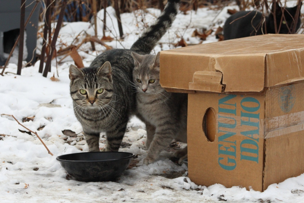 Fundraiser by Lauren Rager : Campus Cats (TNR Feral's at YSU) on