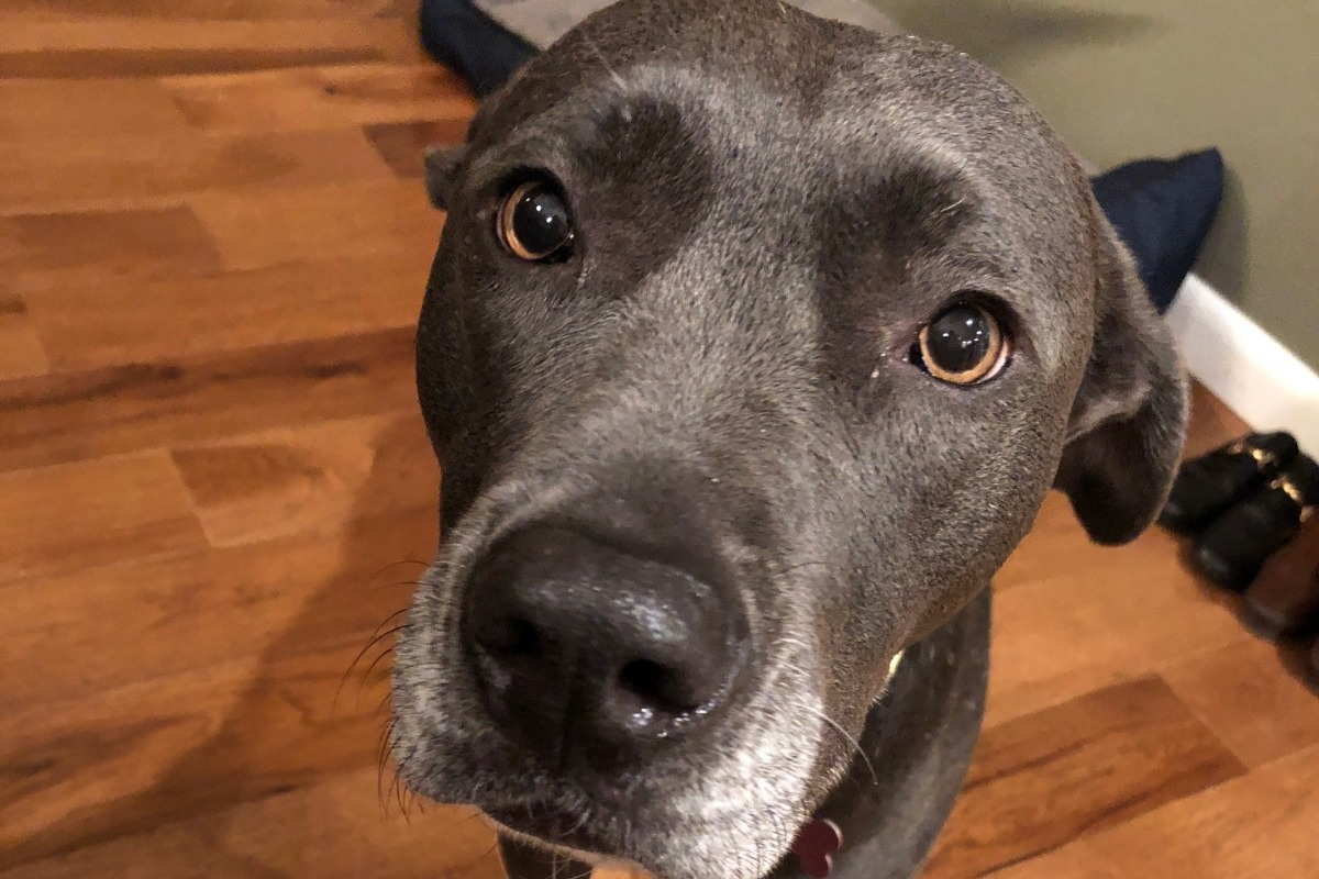Fundraiser by Aileen Sill : Olive's Mast Cell Tumor Removal