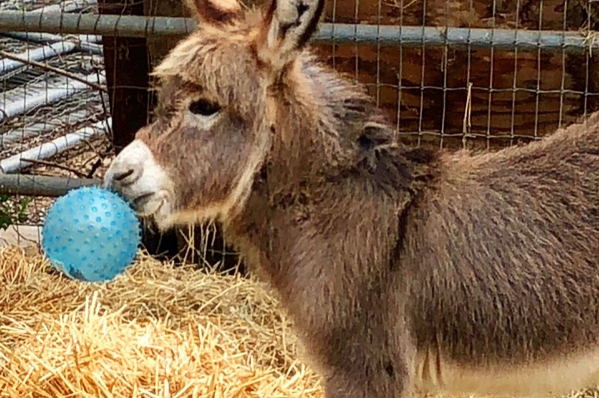 Fundraiser by Lynne Bausmith : Miniature Donkey Rescue