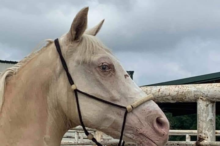 Fundraiser by Hailey Freeman : Rescue Two Kill Pen Horses