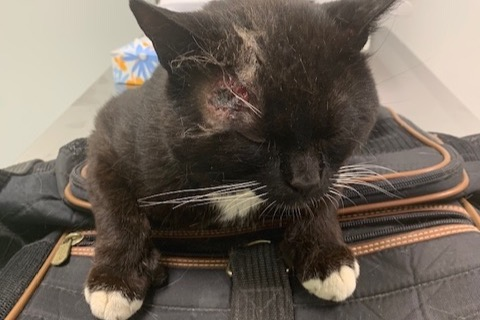 Fundraiser by Benjamin Hubbard : Scrunchy the Street Cat's Recovery