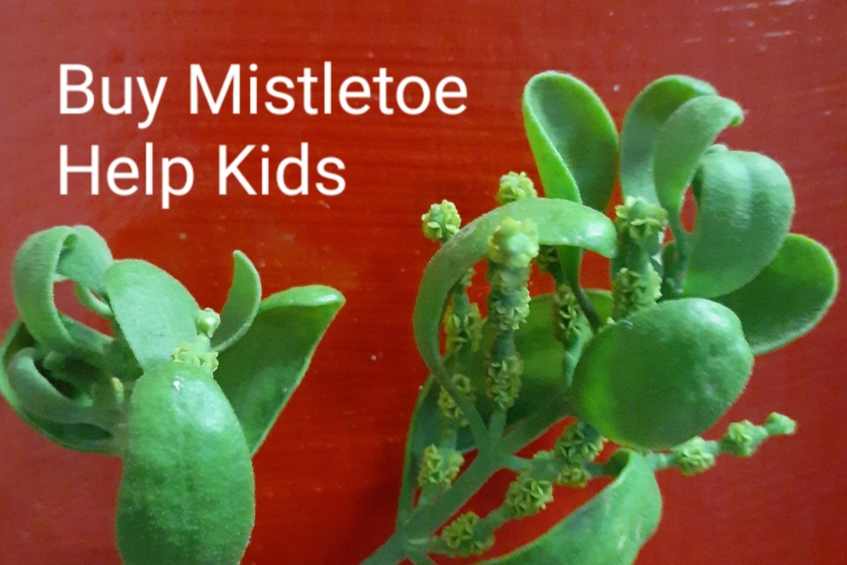 Fundraiser By Sean Rawlins Mistletoe For More