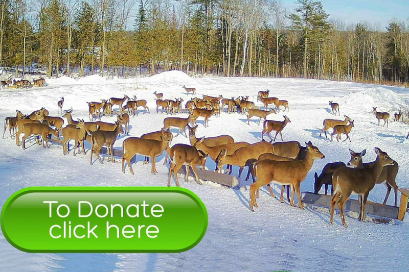 Fundraiser for Brownville food Pantry for deer by Richard ...
